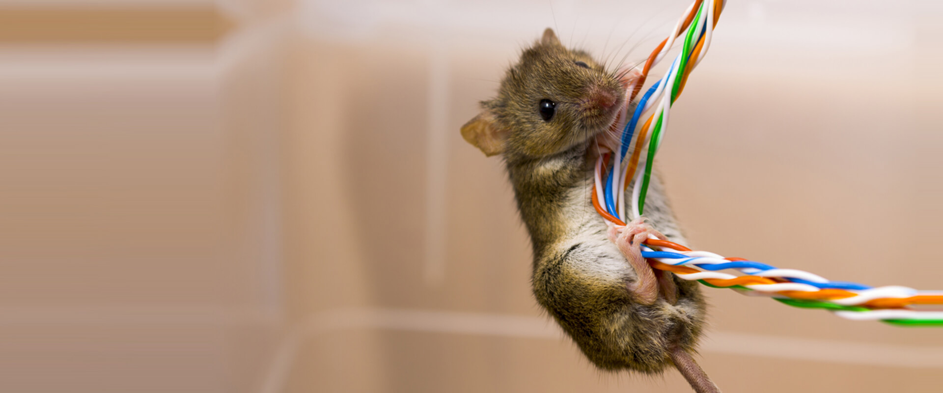 Plast Anto Rodent Masterbatches Application