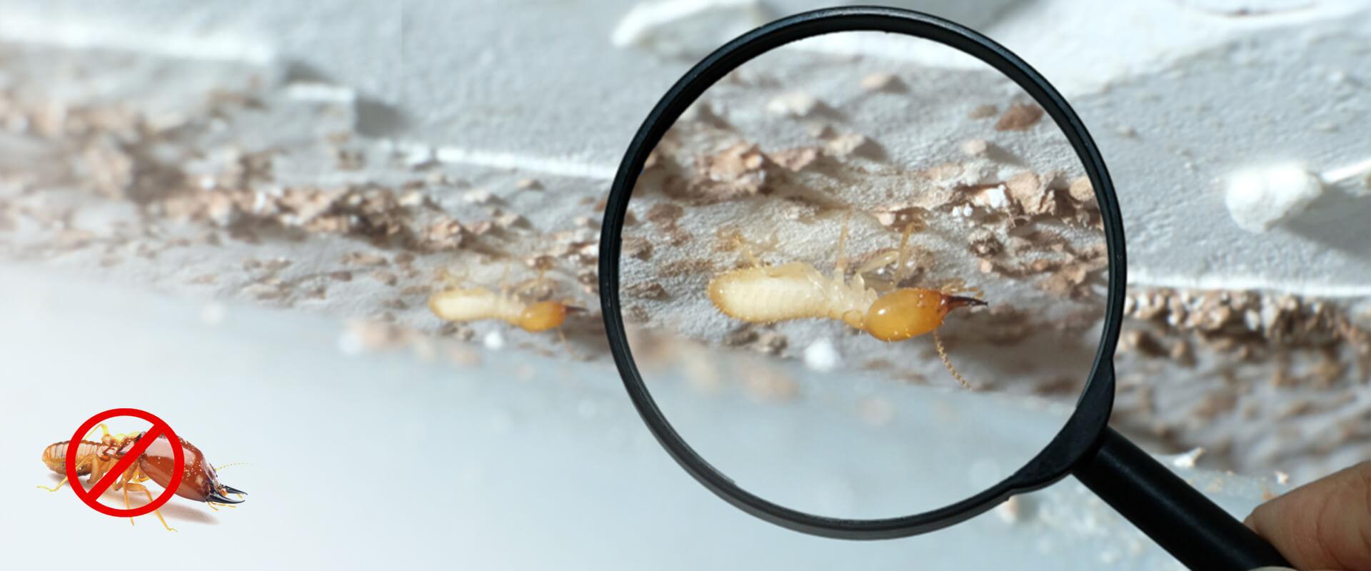 Plast Anti Termite masterbatches Application